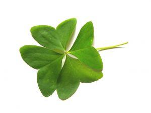 four-leaf-clover-545777-m