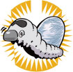shilkworm2